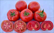 QTM 376 hybrid good taste and high production tomato seeds in vegetable seeds