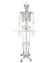 artificial del esqueleto humano 85cm