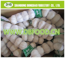 natural white Fresh Garlic 4.5-6.0cm for Europe market with mesh bag package