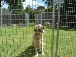 Pet Dog Playpen Puppy Exercise Fence 8 Panel Enclosure Cage Cat Playpen