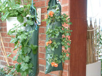 Hanging Herb/Strawberry/ Tomato Planting Bag With Pocket For Garden Planting