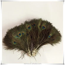 Natural Peacock Feather For Decoration