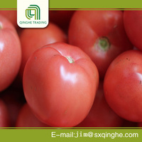 carton cheap tomato for sale price