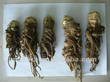 Dried Japanese Angelica