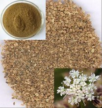 Osthole yellow powder warm kidney factory supply(10% to 98% by HPLC)