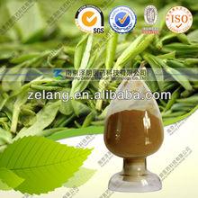 Green Tea Extract Tea Polyphenols Manufacturer