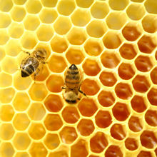 Hot sale 100% natural bee raw honey