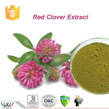 free sample for trial HACCP KOSHER FDA China supplier R&D hormone replacement therapy red clover extract 2.5% biochanins
