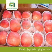 competitive price for fresh apple red star