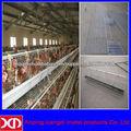 jaulas de pollo para gallinas ponedoras precios