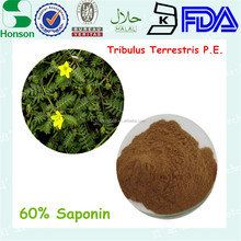 Natural tribulus terrestris extract powder Saponins 40%, 45%, 90%, 98% for NOW FOODS