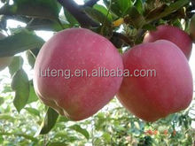 High quality red star apple with cheap price