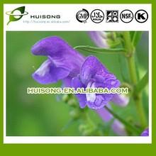 Radix Scutellariae Extract