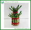 2 layer Dracaena Lucky Bamboo Plants Sale