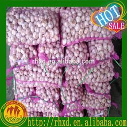 fresh dry garlics /garlic for sale /new fresh garlics