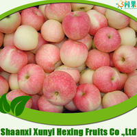 New Crop of Fresh Roya gala apple red apple for importer buyer