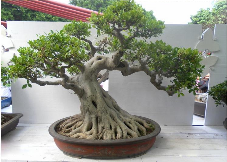 Bonsai artificial de ar mesa de pequenos vasos de plantas artificiais bonsai indoor ou ao ar - Small trees for indoors ...