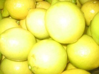 WE SELL Fresh Citrus Fruits, Valencia Oranges & Lemons FROM TURKEY