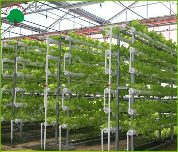 commercial tomato growing techniques pdf