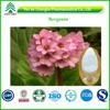High Quality Bergenia Purpurascens Extract Bergenin