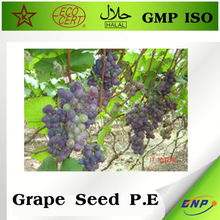 grape seeds extract 95% hplc