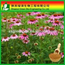 High purity echinacea purpurea extract with Polyphenol
