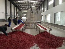 Hot Pepper Color Sorter CCD color sorting machine Belt-type Color Sorter Cayenne/Chili/Capsic/Paprika Selector