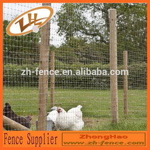 hot dipped galvanised grassland high quality/long lasting shock resistance grassland for breed
