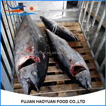 Factory outlet sea frozen longline tuna W/R