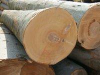 Lumber ,Sawn Timber, White wood, Spruce, Pine, birch, mill,sawmill, Taek, Iroko
