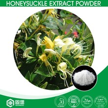 GMP Supplier Natural Flower Extract Chlorogenic Acid 98% Honeysuckle Extract