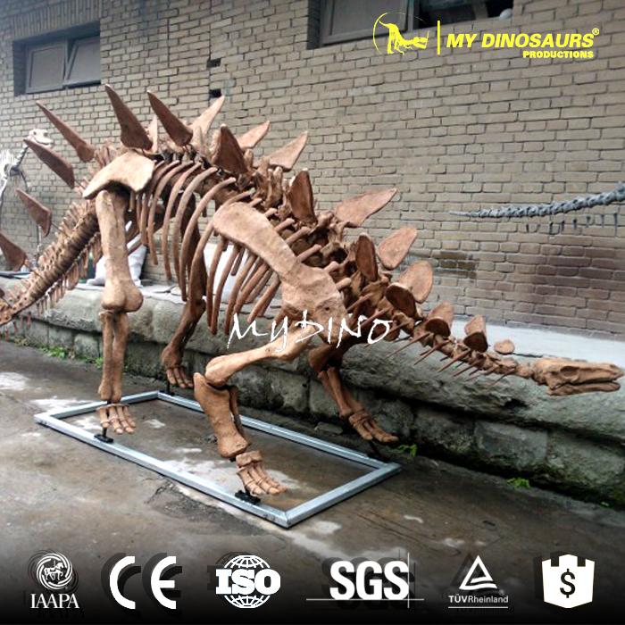 Huayangosaurus skeleton.jpg