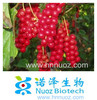 hot sale and top qualtiy 100% natural plant extract powder schisandra chinensis extract