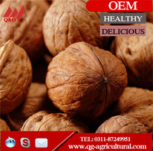 Walnuts in shell and Walnut Kernel