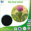 Hot selling Red clover extract with superior quality