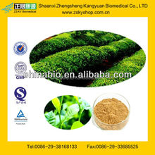 GMP Manufacturer Supply Green Tea Extract Polyphenol