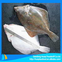 New product plaice fish in sale
