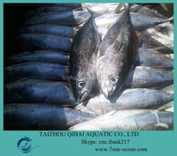 FROZEN YELLOW FIN TUNA FISH WHOLE ROUND