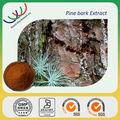 Gmp de fornecimento natural ervas de alta qualidade 95% proantocianidinas casca de pinheiro pó