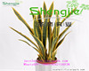 SJLJ0727 hot sale decorative manufacture plant with competitive factory price ,artificial plant, artificial agave plant