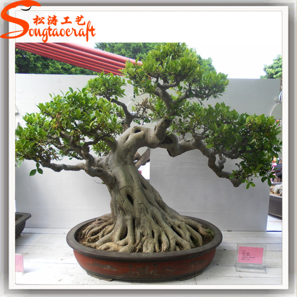 Backyard Bonsai Trees :  bonsai tree , SongtaoLarge Outdoor Bonsai Trees Product Details from