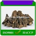 chino negro seco de setas morel para la venta
