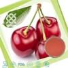 100% Natural Acerola Cherry Fruit Powder