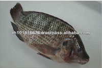 Best Quality Seafood Product Frozen Black Tilapia Fish