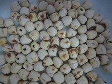 White Dried Lotus seed