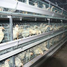 Camada de frango gaiola / fio de galinha para gaiola de pássaro / gaiola de galinha venda na áfrica do sul