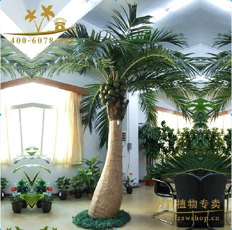 Lxy082401 zimmerpflanzen zuhause dekorative kokospalme for Dekorative zimmerpflanzen