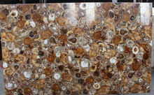 Natural polished all kinds of petrified wood tile and slabs from direct factory