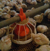 2015 hot sale automatic house equipment for chicken broiler