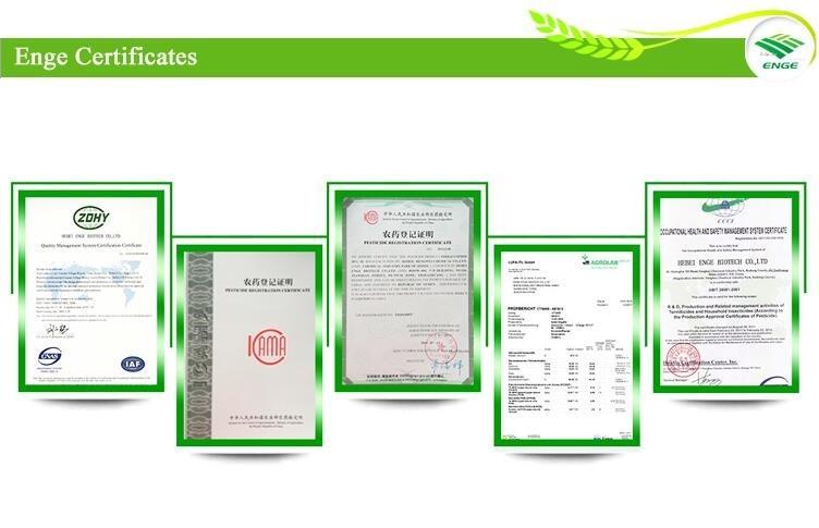 Enge 7 certificates